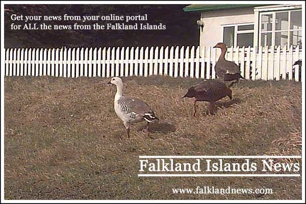Falkland Islands News